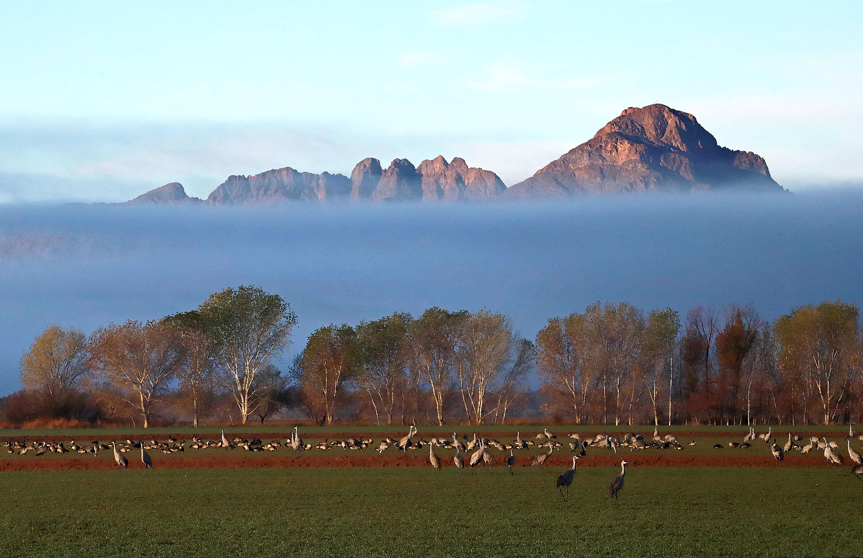Photo by Elizabeth Nappier-Leslie      Sandhill Cranes and Fog