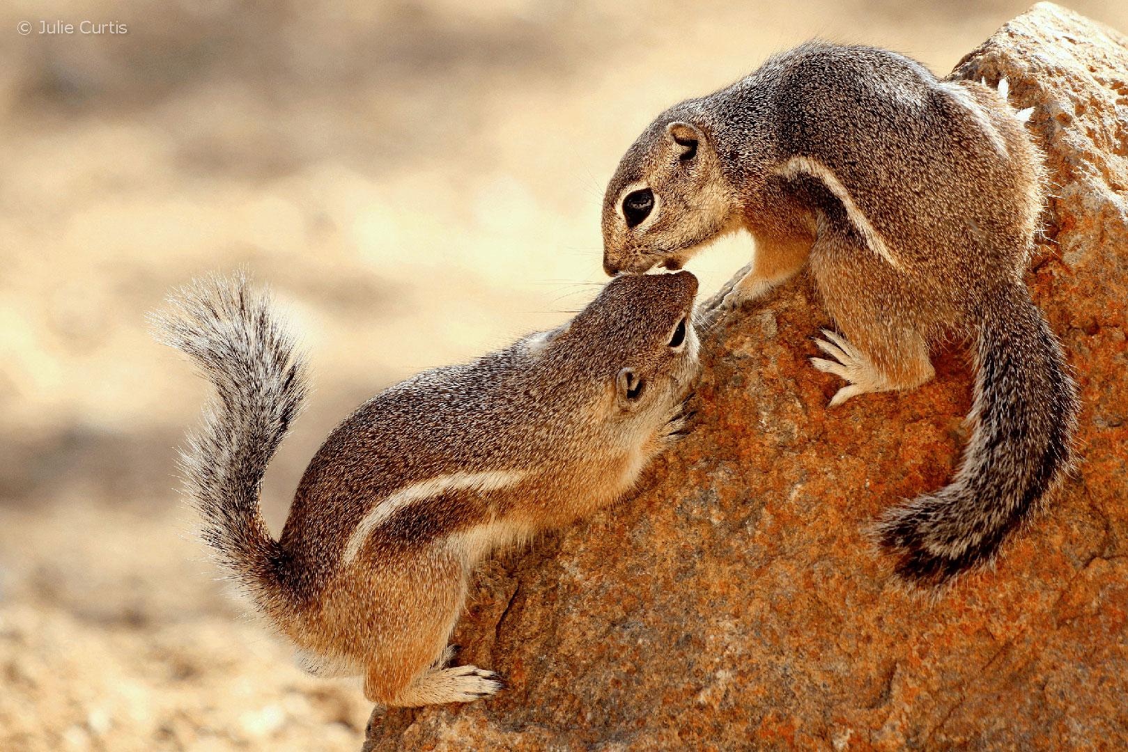 Enter the 2020 Arizona Wildlife Views Photo Contest