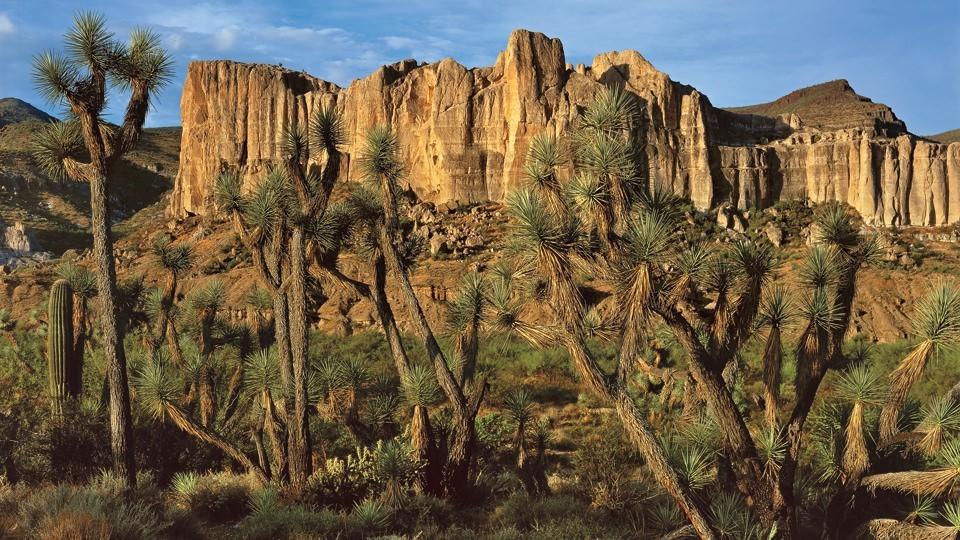 Joshua Tree Parkway Az Highways - Us-93-arizona-map