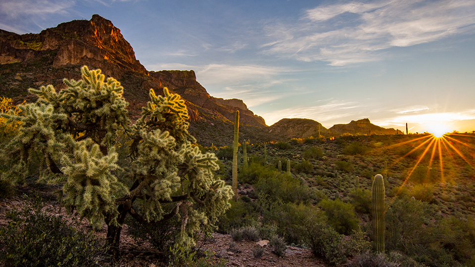 The Hieroglyphic Trail features the beautiful vegetation of the Sonoran Desert. | Joel Hazelton