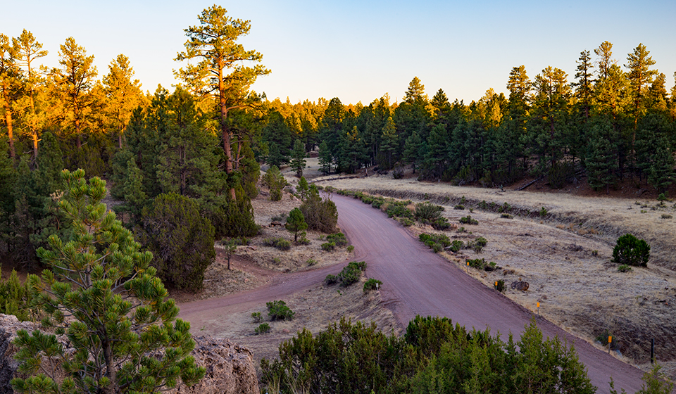 Chevelon Crossing, Evening light bathes ponderosa pines and other evergreens along Forest Road 504. Joel Hazelton