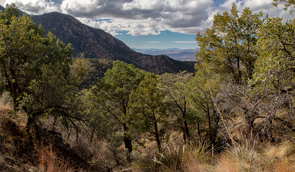 The Bog Springs/Kent Spring Loop rewards hikers with views of the Santa Rita Mountains. Jeff Maltzman