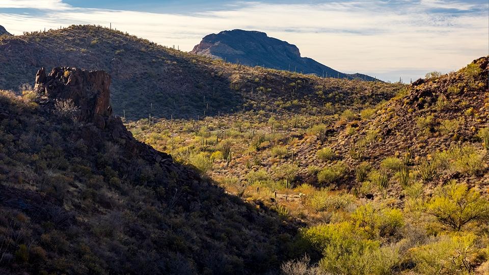 Sonoran Desert flora and mountain views abound along the Estes Canyon-Bull Pasture Loop.   Jeff Maltzman