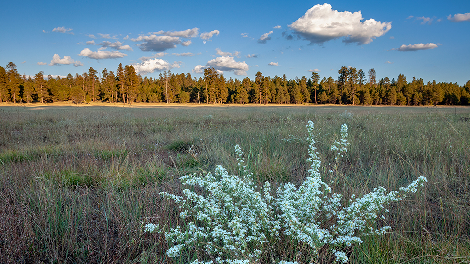 Forest Road 135 passes numerous meadows lined with ponderosas. | Paul Gill