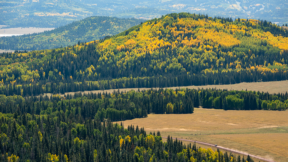 Evergreens surround autumn-hued aspens in a view from atop Greens Peak. | Bill Hatcher