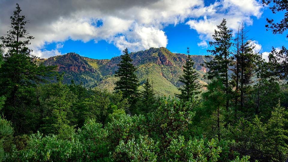 The Mogollon Rim's Promontory Butte looms over forest greenery. | Nick Berezenko