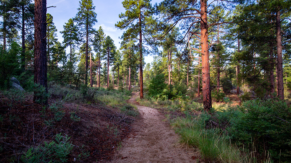 The Wolf Creek Loop is an easy route that winds through a forest of ponderosa pines, woodland oaks and other hardwoods. | Joel Hazelton