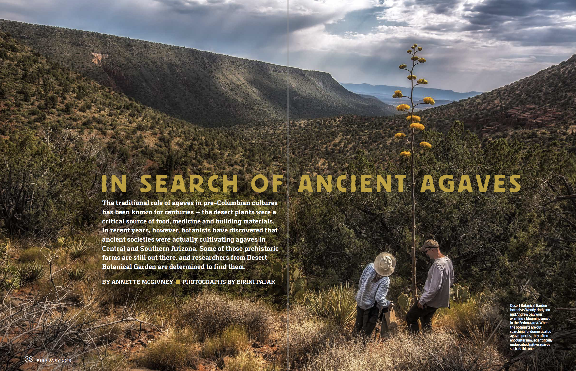 Annette McGivney, In Search of Ancient Agaves