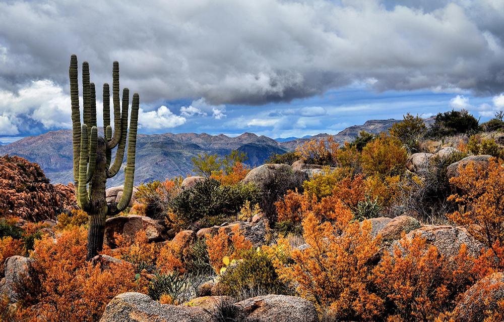 Arizona Highways Photo of the Day | Arizona Highways Magazine