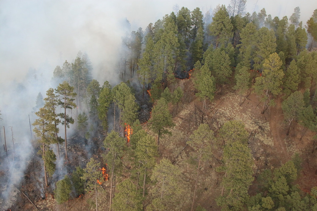Rattlesnake Fire in the Apache-Sitgreaves National Forests