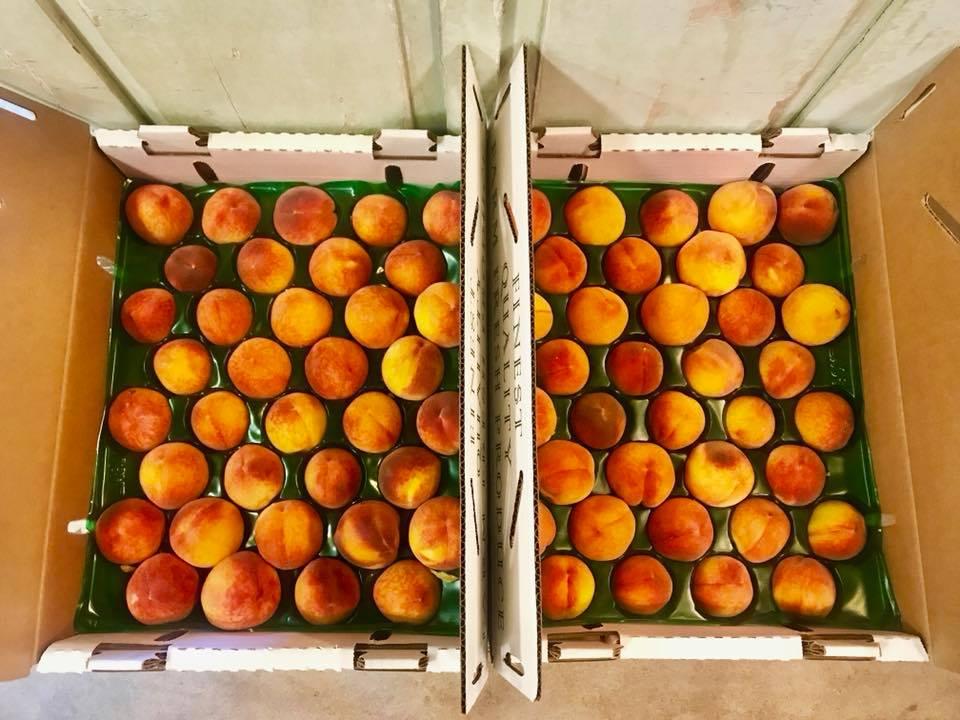 Schnepf Farms peaches