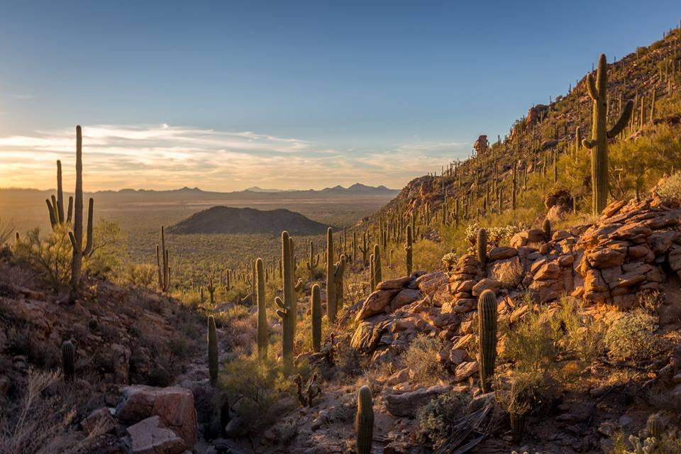 https://www.arizonahighways.com/sites/default/files/vijay_kannan_saguaro_national_park_west.jpg
