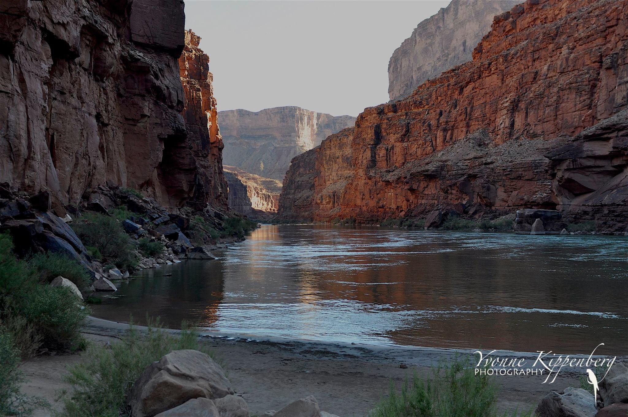 Colorado River by Yvonne Kippenberg