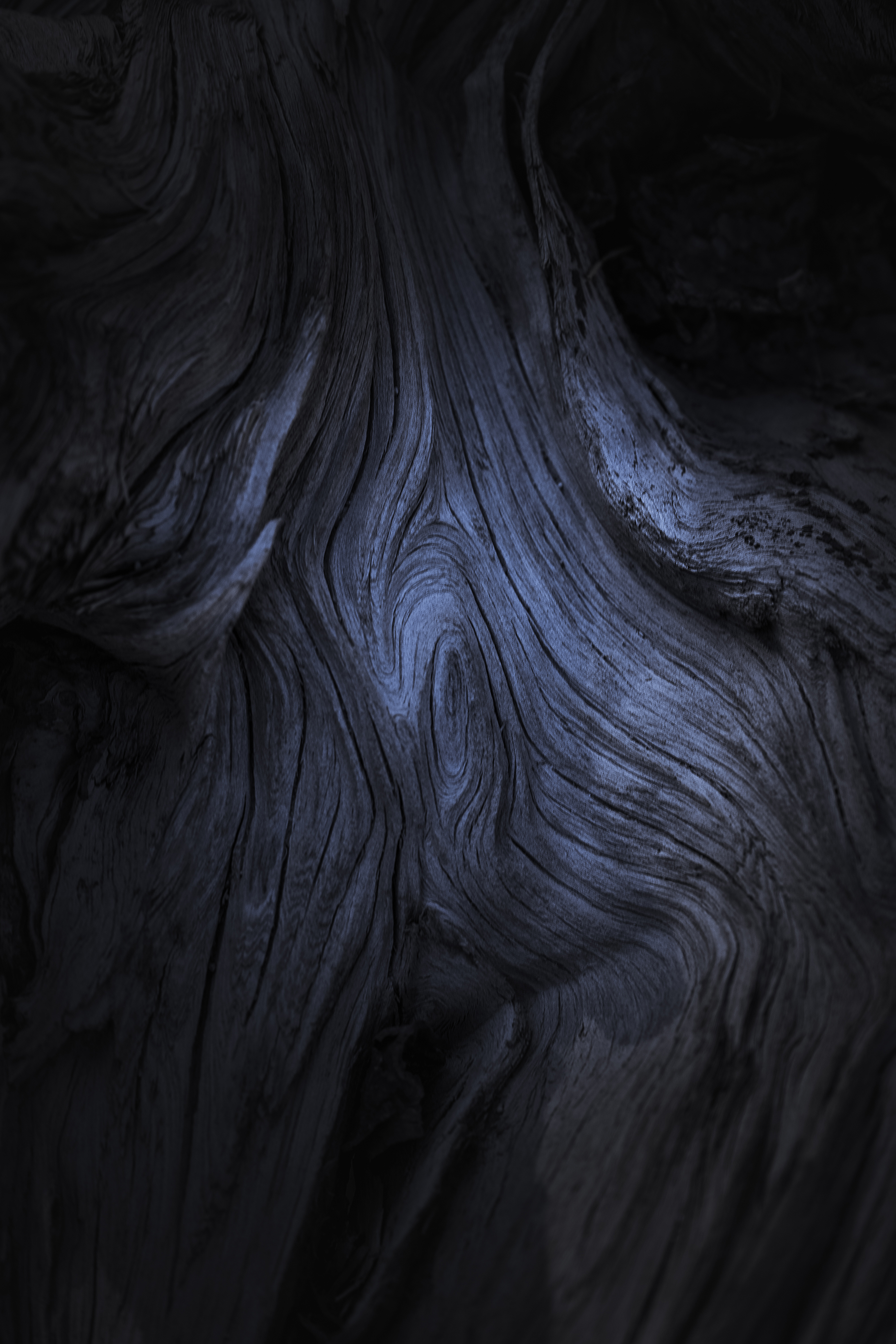 Photo by Alexander Miller     Close up texture of a dead tree in Flagstaff.